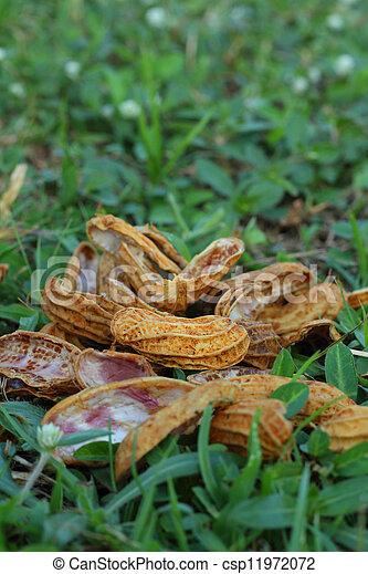 Peanuts - csp11972072