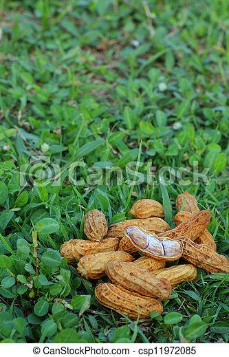 Peanuts - csp11972085