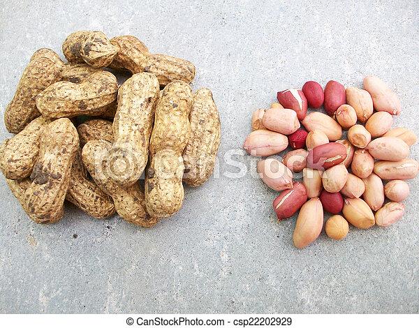 Peanuts - csp22202929