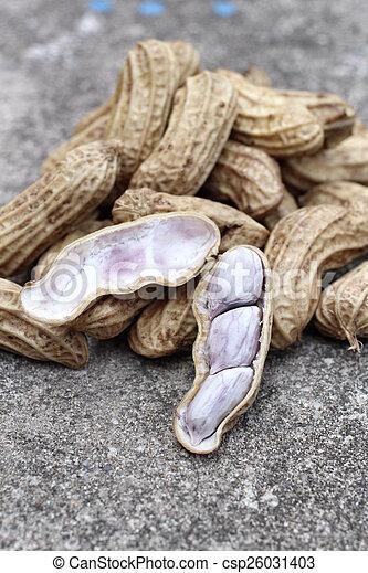 Peanuts - csp26031403