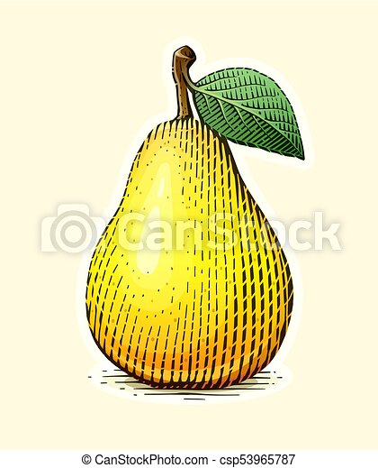 Pear with leaf. Fruit in vintage engraving style. - csp53965787