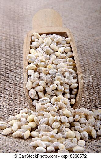 pearl barley on a wooden shovel - csp18338572