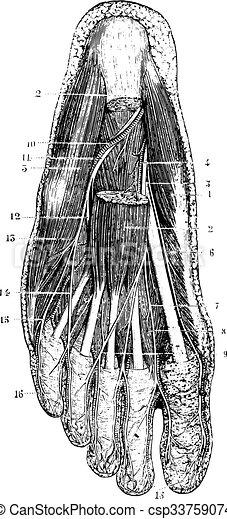 peau, couche, engraving., semelle, surface, pied, vendange, déménagement, après - csp33759074