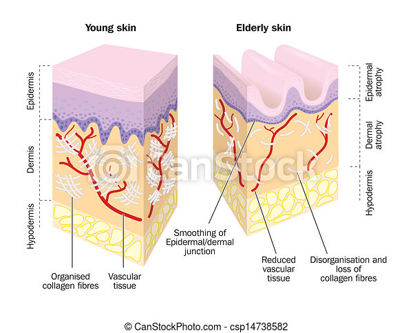 peau, vieux, jeune - csp14738582