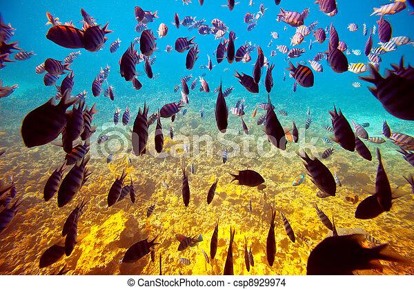 Pescados tropicales en arrecifes de coral - csp8929974