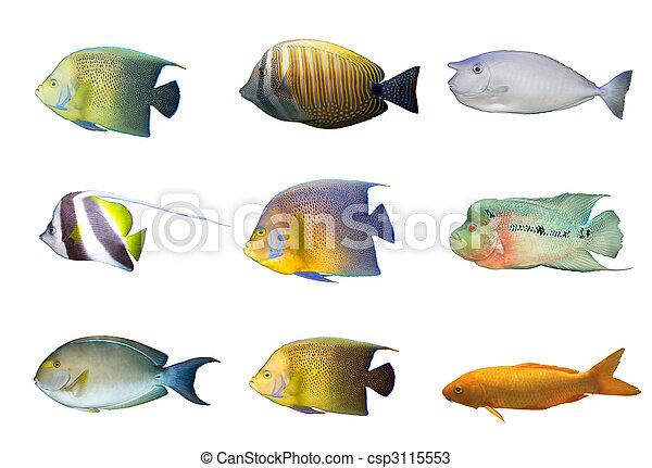 Selección de peces coral tropicales aislados - csp3115553
