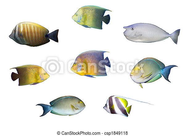 Selección de peces coral tropicales aislados - csp1849118