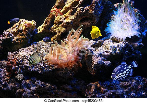 Pescados tropicales - csp45203463