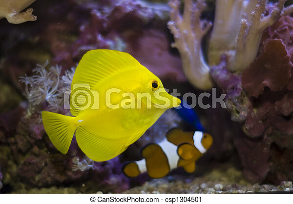 Pescados tropicales - csp1304501