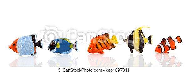 Pescados tropicales - csp1697311