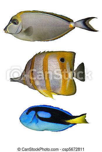 Tres peces tropicales - csp5672811