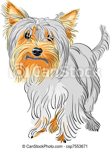 Pedigreed Vector Terrier Perro Yorkshire