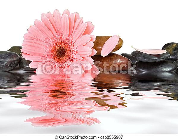 pedras, cor-de-rosa, isolado, fundo, margarida, spa, branca - csp8555907