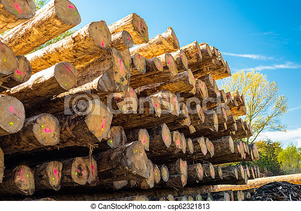 Peeled logs lying in piles on the ground on a sunny day. - csp62321813