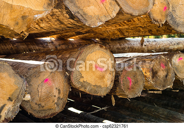 Peeled logs lying in piles on the ground on a sunny day. - csp62321761