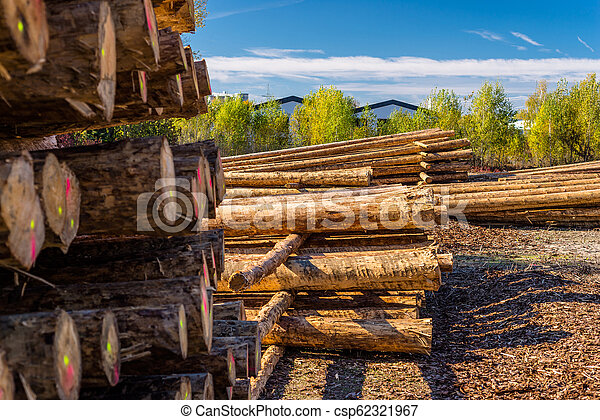 Peeled logs lying in piles on the ground on a sunny day. - csp62321967