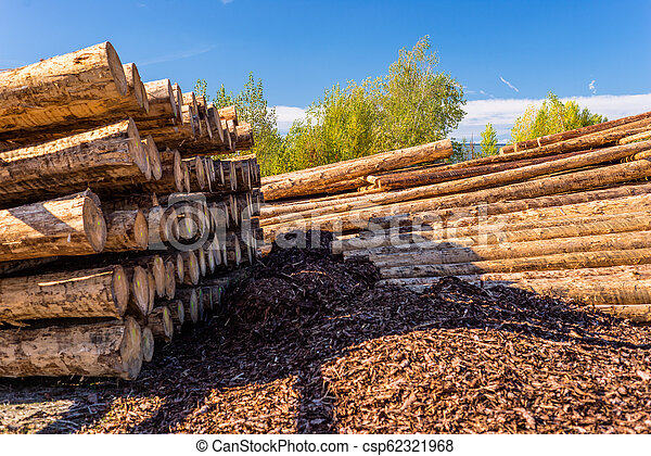 Peeled logs lying in piles on the ground on a sunny day. - csp62321968