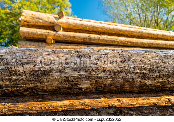 Peeled logs lying in piles on the ground on a sunny day. - csp62322052