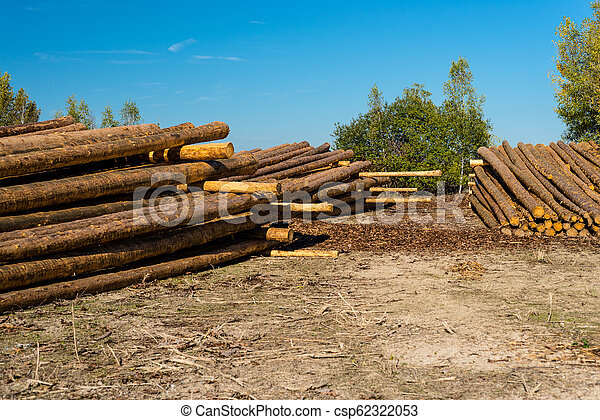 Peeled logs lying in piles on the ground on a sunny day. - csp62322053