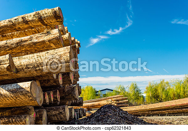 Peeled logs lying in piles on the ground on a sunny day. - csp62321843