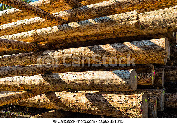 Peeled logs lying in piles on the ground on a sunny day. - csp62321845