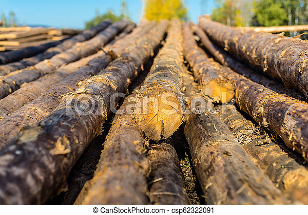 Peeled logs lying in piles on the ground on a sunny day. - csp62322091