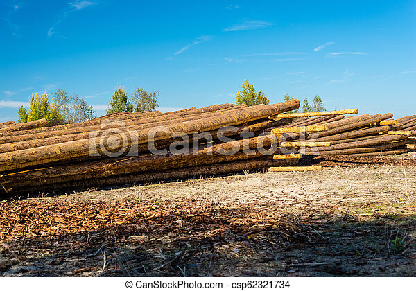 Peeled logs lying in piles on the ground on a sunny day. - csp62321734