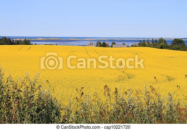 P.E.I. summer landscape - csp10221720