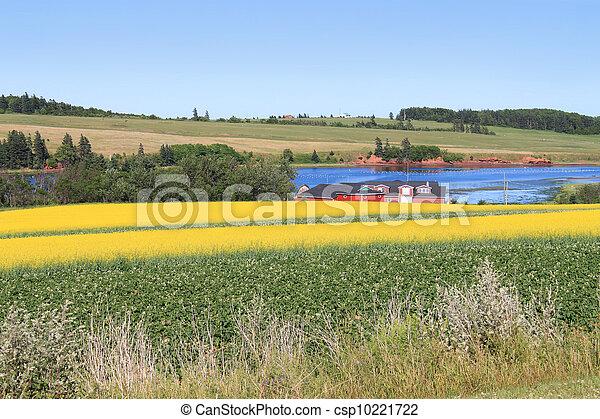 P.E.I. summer landscape - csp10221722