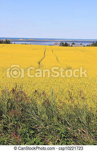 P.E.I. summer landscape - csp10221723