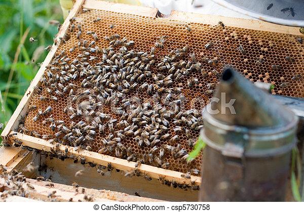 El viejo peine abrió colmena y abejas - csp5730758