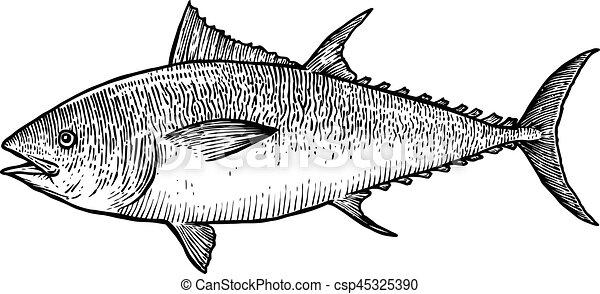 Peixe Ilustracao Desenho Linha Realistico Gravura Vetorial