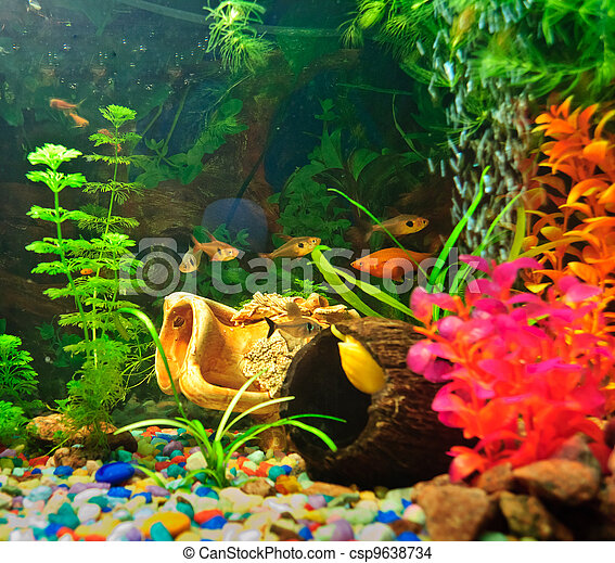 peixes, diferente, aquário, espécie - csp9638734