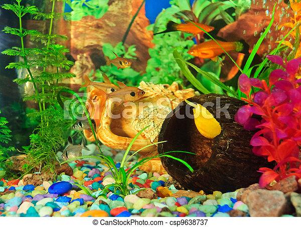 peixes, diferente, aquário, espécie - csp9638737