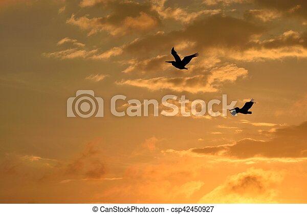 Los pelícanos vuelan al atardecer - csp42450927