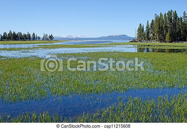 Pelican Creek, Yellowstone National Park, Wyoming, USA - csp11215608