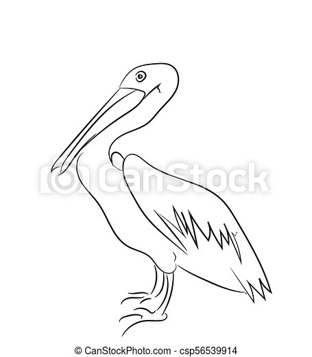 Black and white pelican standing forward-facing clipart. Commercial use  GIF, JPG, clipart # 130557 | Graphics Factory