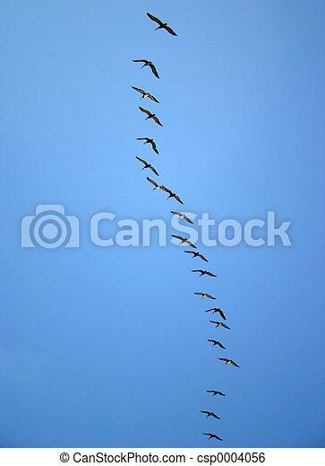 Pelican Row - csp0004056