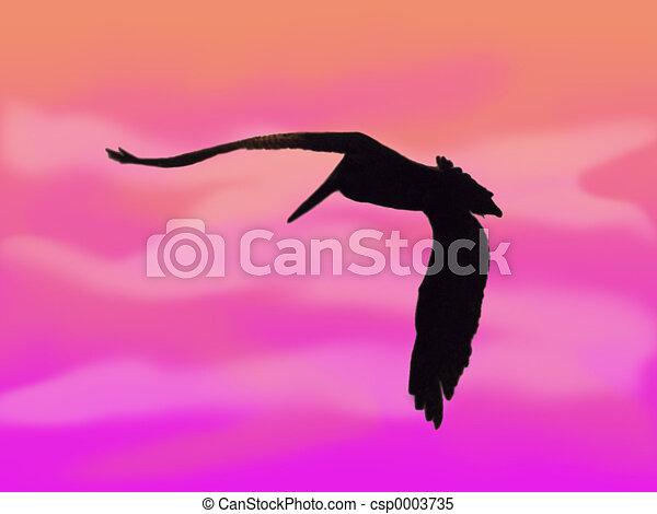 Pelican Silhouette - csp0003735