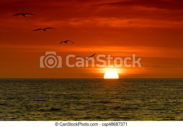 Pelicans in the Sunset - csp48687371