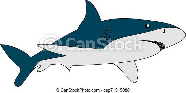 Tiburón peligroso, ilustración, vector de fondo blanco. - csp71515088