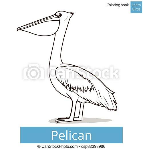 Pelikan, färbung, vogel, vektor, lernen, vögel, buch.... Vektor ...