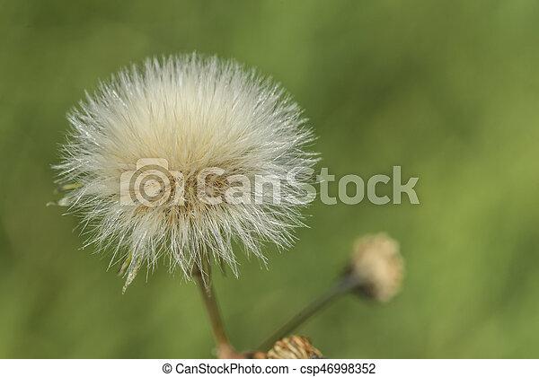 Un primer plano de una flor con un pelo muy fino - csp46998352