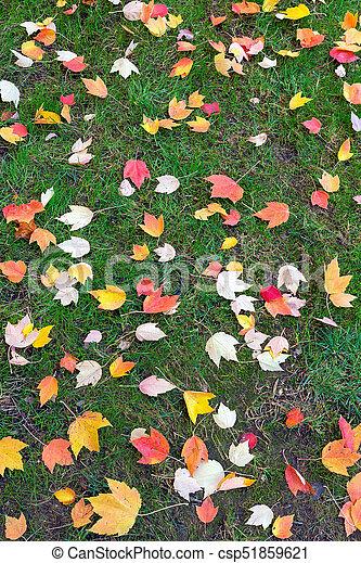pelouse, feuilles, arbre, vert, automne, érable - csp51859621