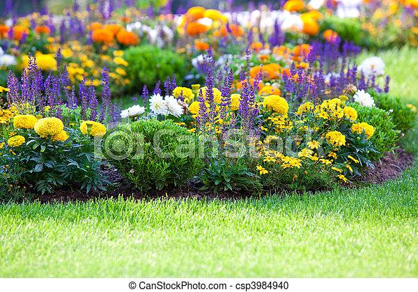 pelouse parterre fleurs multicolore prise prise vue. Black Bedroom Furniture Sets. Home Design Ideas