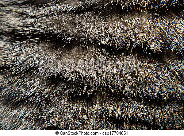 Hintergrund von Katzenpelz - csp17704651