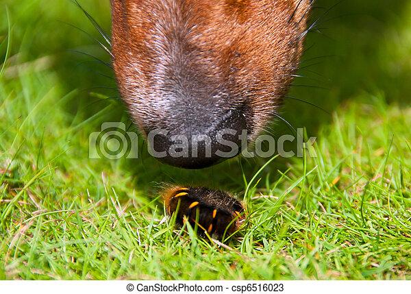 Pelzartig Wurm Hund Schnüffeln Closeup Neugierig