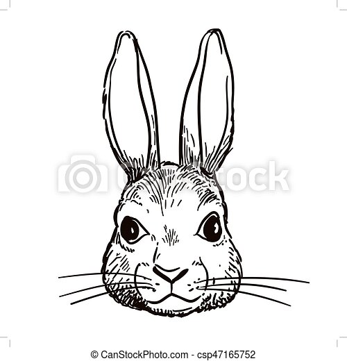 Pen And Ink Rabbit Head Sketch Vector Hand Drawn Pen And Ink Black