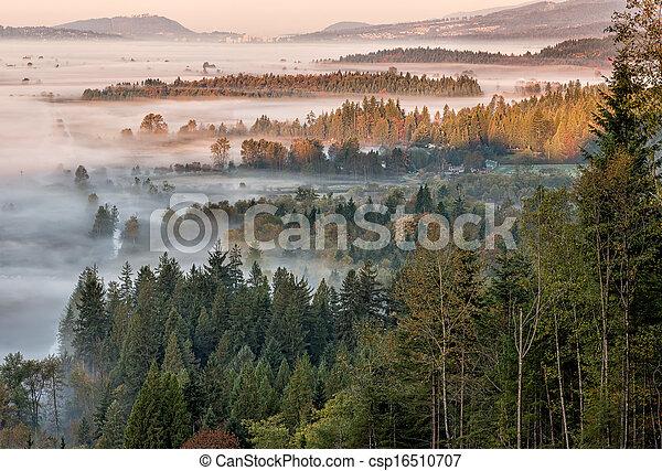 pendant, brouillard, vue, forêt, matin - csp16510707