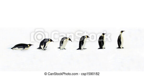 Penguin Evolution - csp1590182